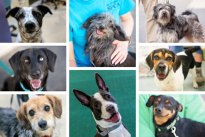Photo grid containing eight images of dogs demonstrating a variety of traits.