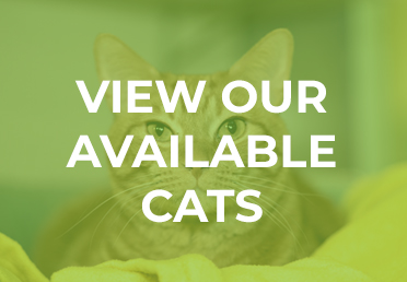 View our Available Cats