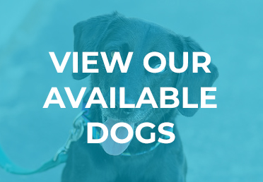 View our Available Dogs