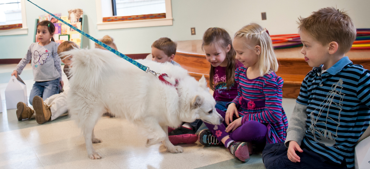Balto, a fluffy white Samoyed mix dog, visiting a group of children during a birthday party at the Richmond SPCA