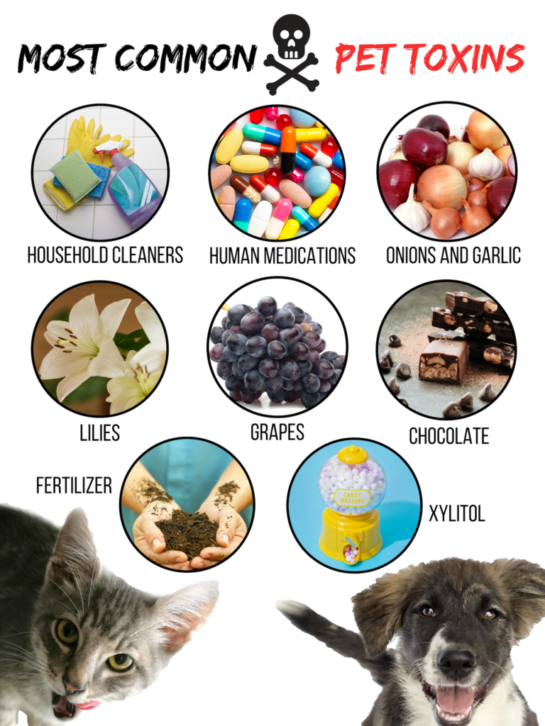 Common toxicities in companion animals - Richmond SPCA