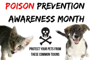 graphic with text: poison prevention awareness month, photos of kitten and dog