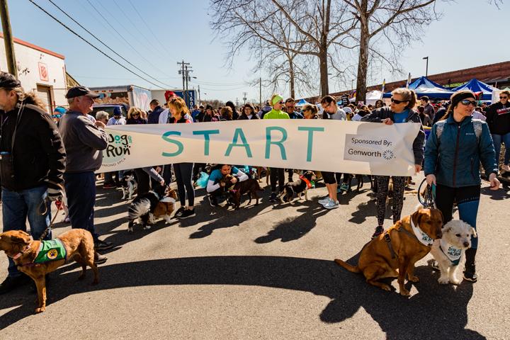 Start line of the 2019 Dog Jog