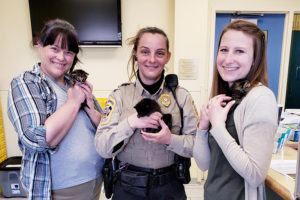 Bottle baby kittens transferred from Hopewell Animal Services
