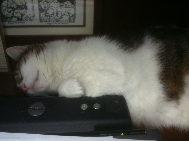 Dumbledore napping on computere
