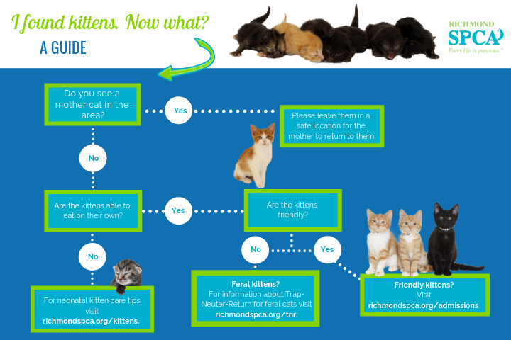 Infographic: I found kittens. Now what?