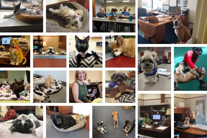 Pets at work at the Richmond SPCA