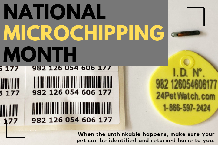 blog graphic for National Microchipping Month