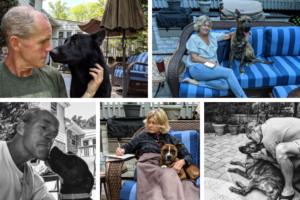 grid of five photos showing dogs fostered by Bill and Shawn Riester