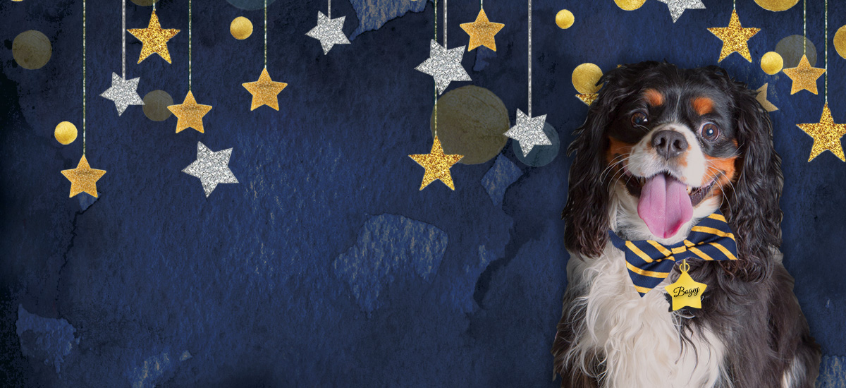 Fur Ball - Richmond SPCA