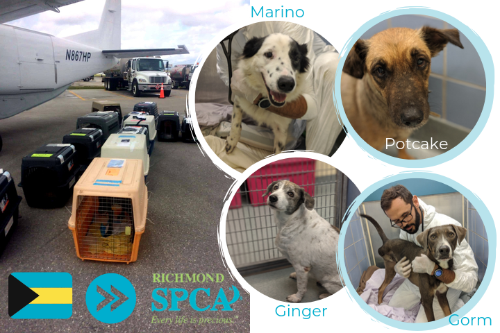Four dogs rescued from the Bahamas arrive at the Richmond SPCA