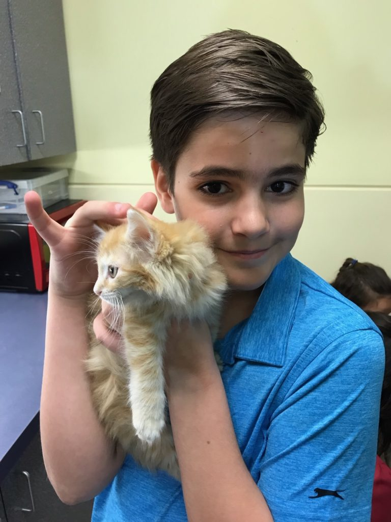boy in blue polo holding a long-haired orange kitten