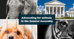 Grid of four photos: elephant, Virginia General Assembly building, tiger, puppy behind kennel bars