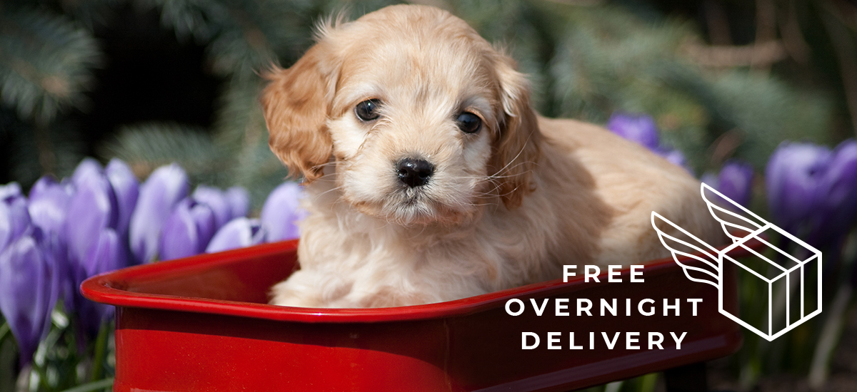 "puppy in red wagon overlaid with text ""Free Overnight Delivery"""