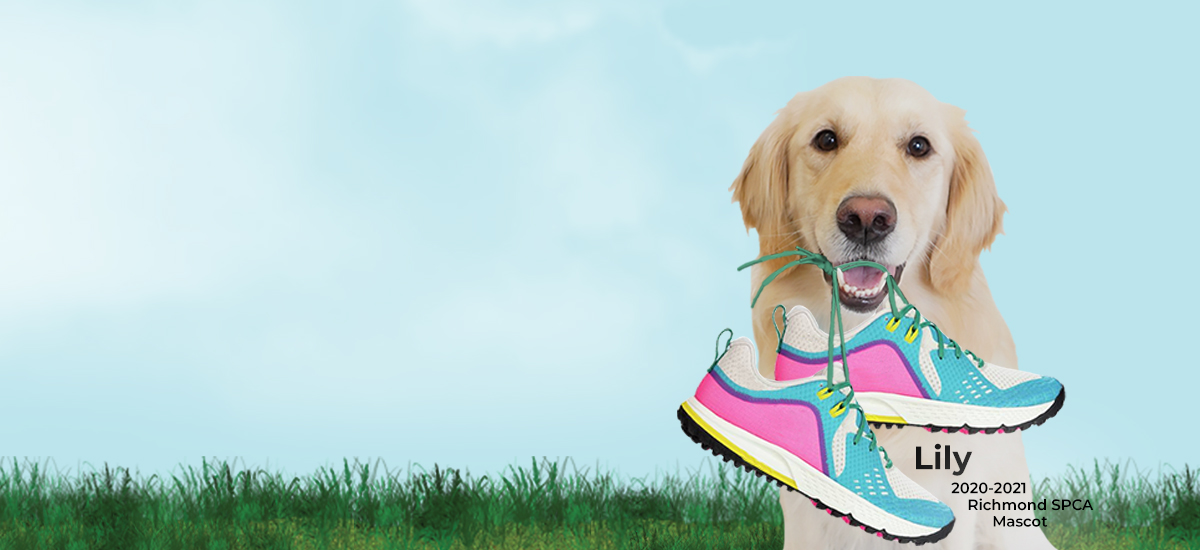 smiling Lily, golden retriever, holding running shoes