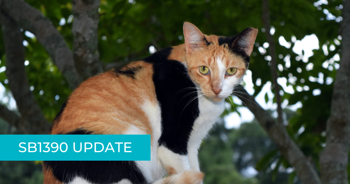 "eartipped calico cat overlayed with text ""SB1390 update"""