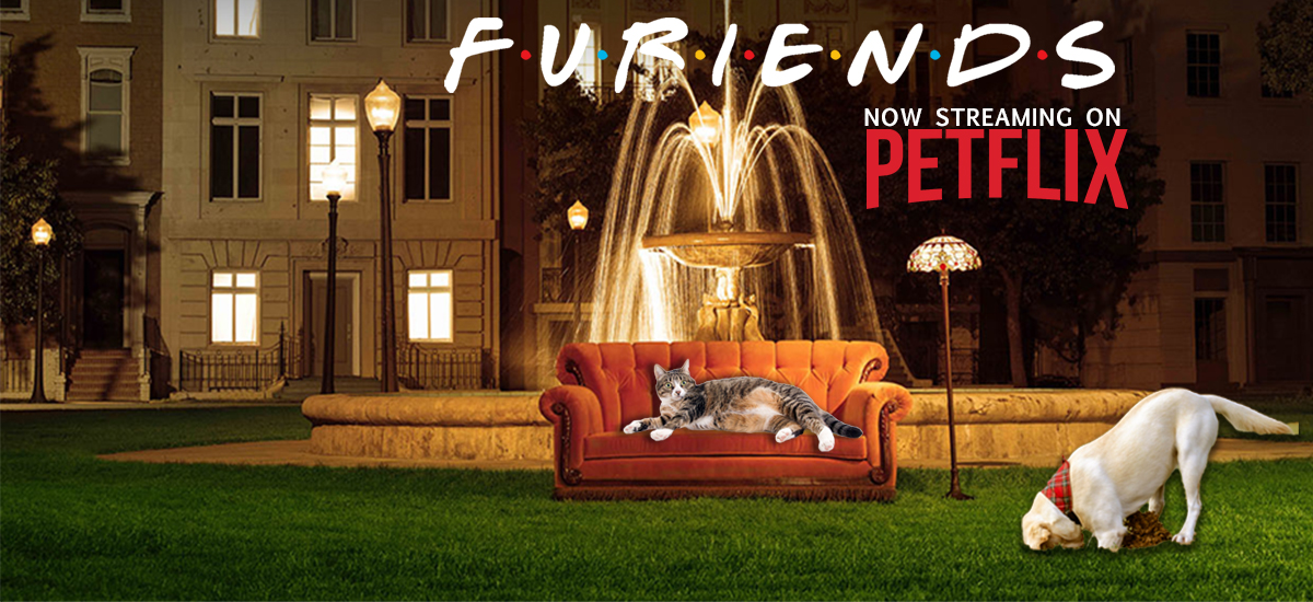 """cat lounges on the iconic """"Friends"""" sofa while a dog digs in the foreground"""