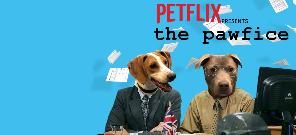 "Elliot and Dave star in ""the pawfice"" streaming now on Petflix"