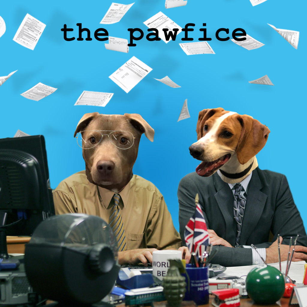 """Elliot and Dave star in """"the pawfice"""" streaming now on Petflix"""