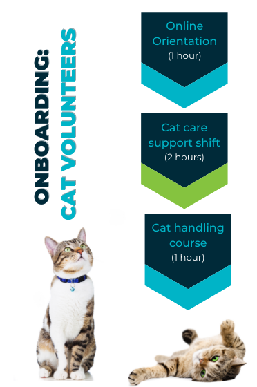 Flowchart describing training requirements for volunteers working with cats