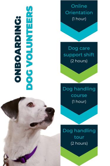 flowchart of dog volunteer training requirements