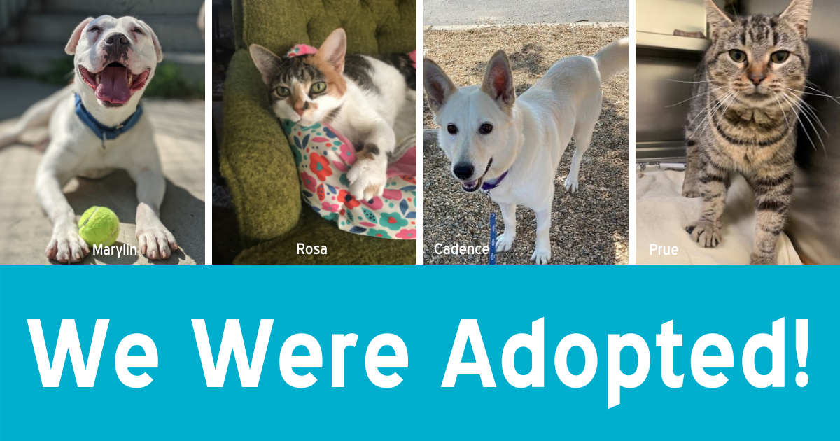 """Four pet photos above the text """"We Were Adopted"""""""