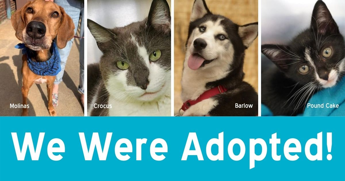"""Photos of four recently adopted pets above the text, """"We Were Adopted!"""""""