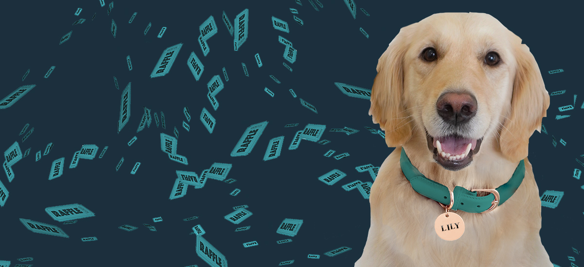 """smiling golden retriever with nametag """"Lily"""" on turquoise background with raffle tickets flying through the air"""