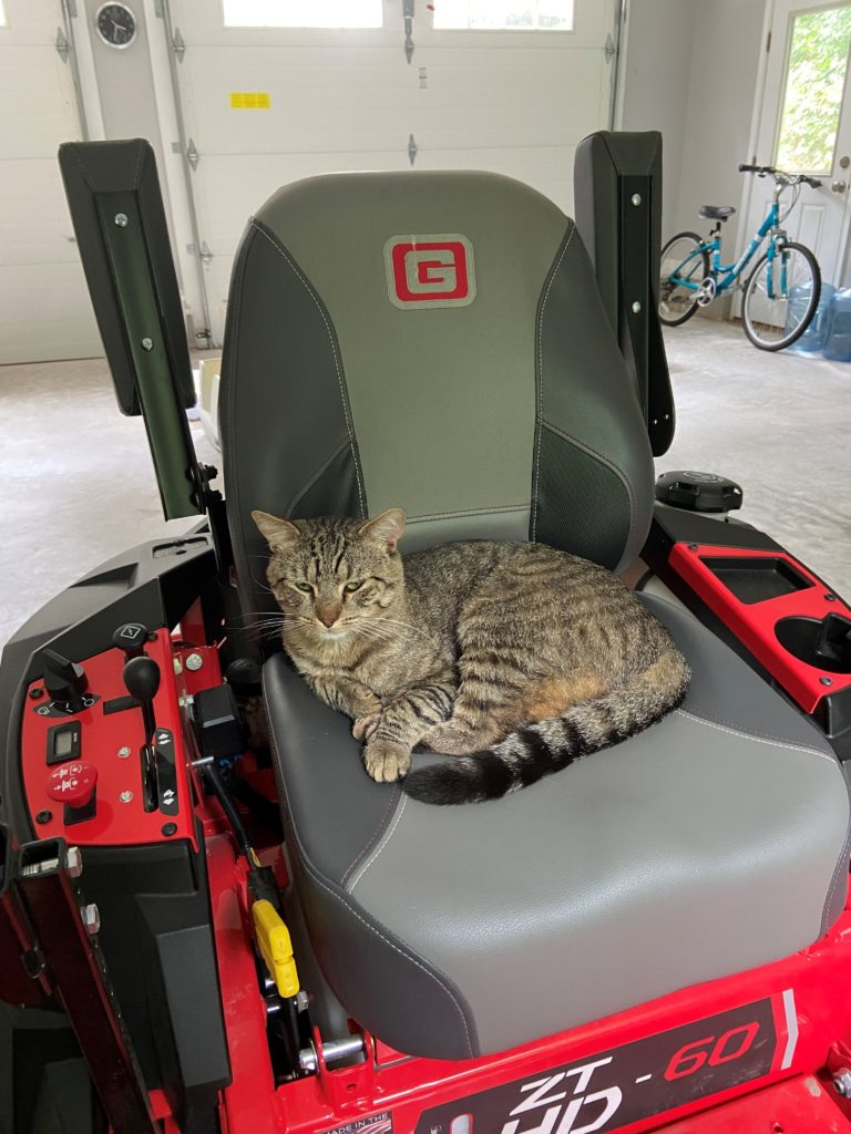 A riding lawnmower is parked inside a garage. It is red with a grey cushioned seat. In the seat, the cat Jackson is curled up with his striped tail wrapped around him.